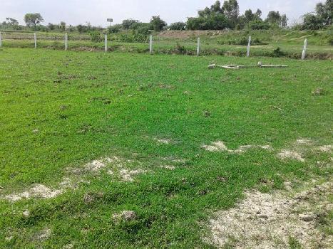 Sanctuary Farms