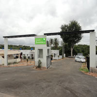 Green Jasmines - Mysore