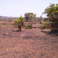 Royale Valley - Mahad, Raigad