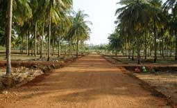 JBM Dakshin Nagar, Chennai - Spacious City
