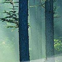 Antriksh Forest - Noida