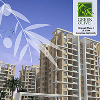 Green Olive - Pune