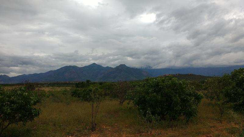 Factory Plot / Land for Sale in Periyakulam, Theni - 115 Acre