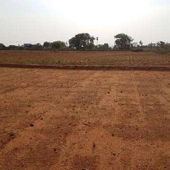 2 Bigha Farm Land for Sale in Makhida Flay Road Bundi