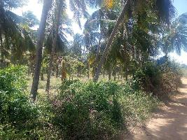 15 Acre Farm Land for Sale in Tenkasi, Tirunelveli