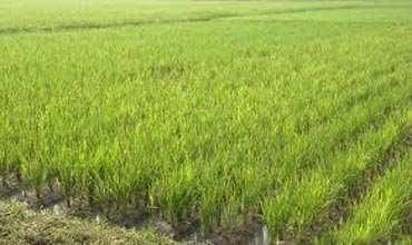 Farm Land for Sale in Vadodara - 2.5 Bigha