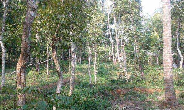 Residential Plot for Sale in Perinthalmanna, Malappuram - 18 Cent