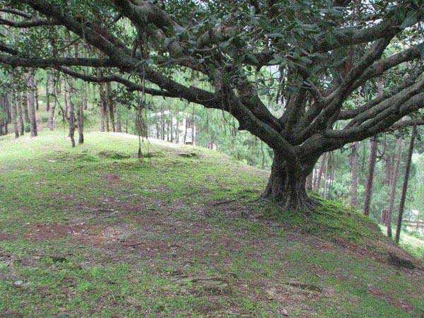 Commercial Lands /Inst. Land for Sale in Lansdowne, Pauri Garhwal - 7 Bigha