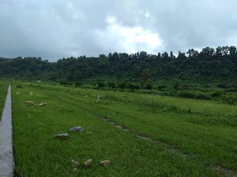 500 Bigha Farm Land for Sale in Vikas Nagar, Dehradun