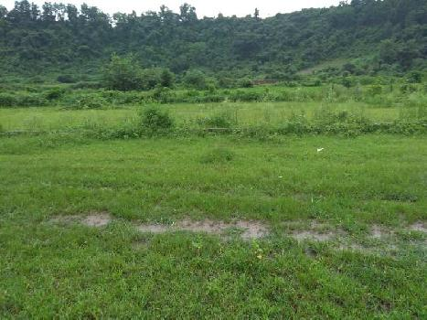 500 Bigha Farm Land for Sale in Selakui, Dehradun