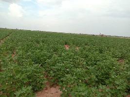 80 Bigha Farm Land for Sale in Pokhran, Jaisalmer