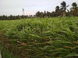 Farm Land for sale in Pollachi, Coimbatore | Buy/Sell