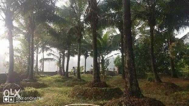 1 BHK 2888 Sq. Meter Farm House for Sale in Kankavli, Sindhudurg