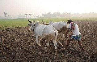10000 Sq.ft. Farm Land for Sale in Melmaruvathur, Chennai