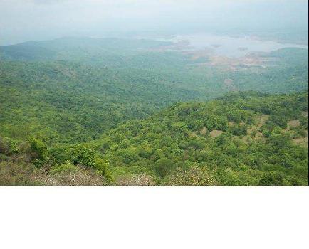 1500 Acre Farm House for Sale in Sindhudurga City Sindhudurg