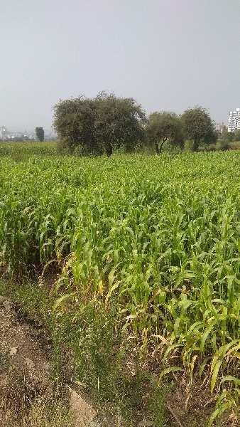 100 Acre Residential Plot for Sale in Hinjewadi Phase 1, Pune