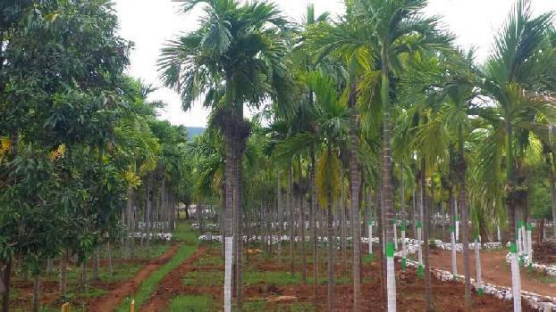 28 Acre Farm Land for Sale in Madampatti, Coimbatore