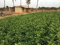 Farm Land for sale in Malur, Bangalore | Buy/Sell