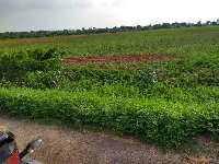 8 Acre Farm Land for Sale in Gauribidanur, Bangalore
