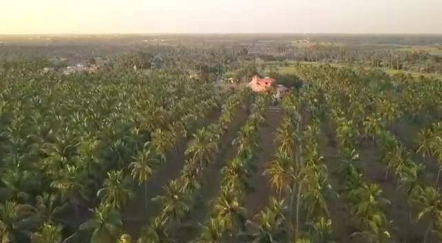 50 Acre Farm Land for Sale in Chinna Dharapuram, Karur