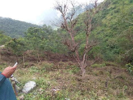 3120 Sq. Yards Farm Land for Sale in Neelkanth Road, Rishikesh