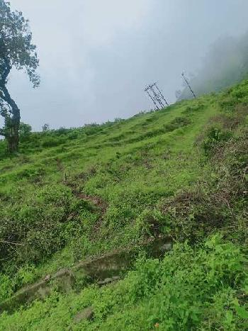 1320 Sq. Yards Farm Land for Sale in Main Road, Dehradun