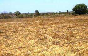 6 Acre Farm Land for Sale in Mundra, Kutch