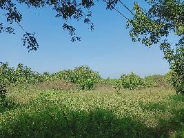 2.5 Acre Farm Land for Sale in Pardi, Vapi