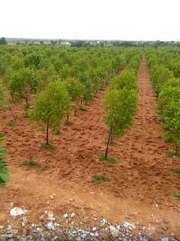 Farm Land for sale in Shad Nagar, Hyderabad | Buy/Sell