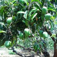 Farm Land for sale in Sindhudurg | Buy/Sell Agricultural Farm Land