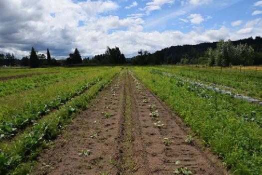 6 Acre Farm Land for Sale in Anjangaon, Amravati