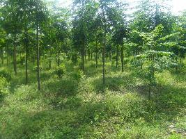 17 Acre Farm Land for Sale in Akkalkot, Solapur