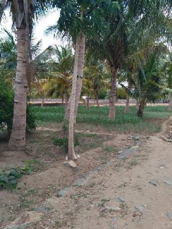 6 Acre Farm Land for Sale in Vennanthur, Namakkal