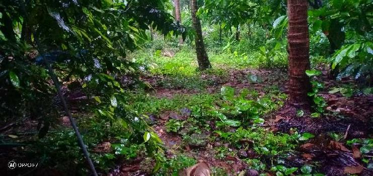 23 Cent Commercial Land for Sale in Manjeri, Malappuram
