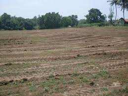 1800 Sq.ft. Residential Plot for Sale in Jhusi, Allahabad