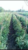 3 Acre Farm Land for Sale in Jatharpeth, Akola