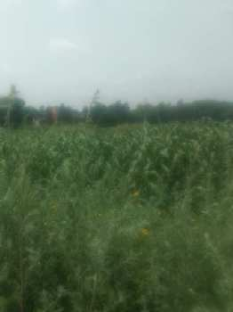 11 Acre Farm Land for Sale in Sohna Road, Faridabad