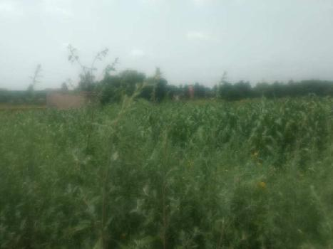 2 Acre Farm Land for Rent in Sohna Road, Gurgaon