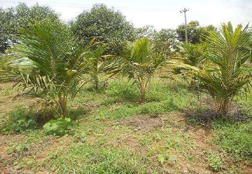 10000 Sq.ft. Farm Land for Sale in Sunguvarchatram, Kanchipuram