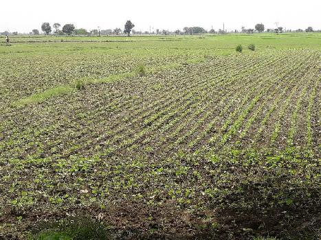 15 Acre Farm Land for Sale in Shyampur, Sehore