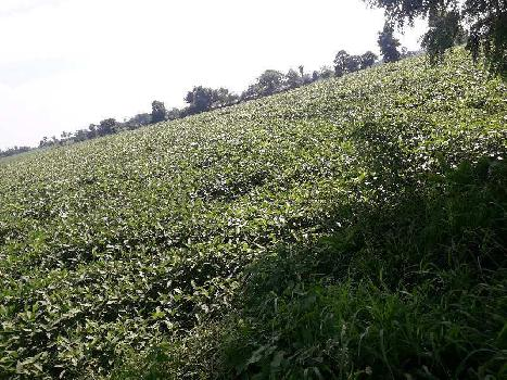 24 Acre Farm Land for Sale in Bhopal Naka, Sehore