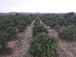 5 Ares Farm Land for Sale in Garladinne, Anantapur