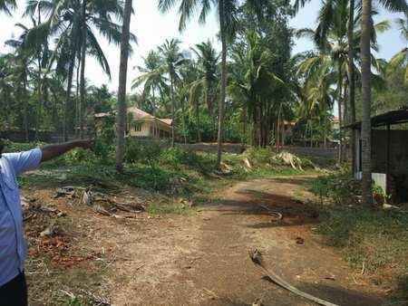 5 Acre Commercial Land for Sale in Kodur, Malappuram