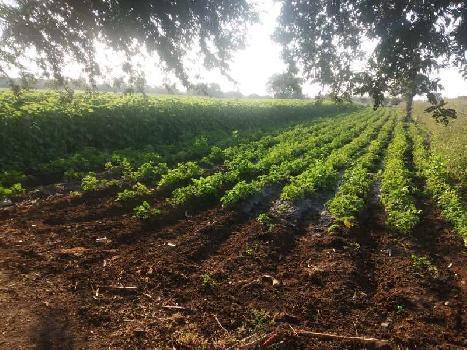 4 Acre Farm Land for Sale in Renapur, Latur