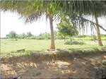 1200 Sq.ft. Residential Plot for Sale in Thanthoni, Karur