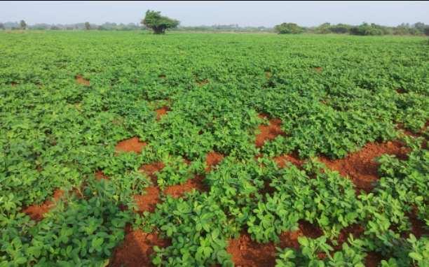 Farm Land for Sale in Madurantakam, Kanchipuram
