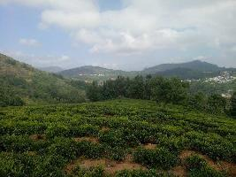 84 Cent Farm Land for Sale in Kappachi, Ooty
