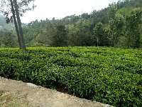 20 Cent Residential Plot for Sale in Coonoor, Ooty