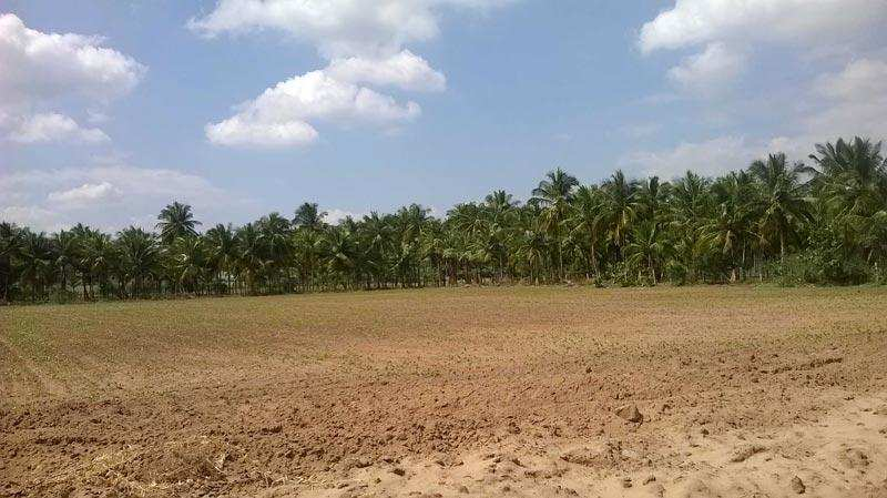 Residential Plot for Sale in Panchkula - 1000 Sq. Yards