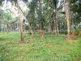 5 Cent Residential Plot for Sale in Karaparamba, Kozhikode
